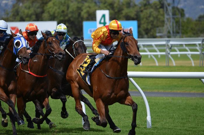 apuestas_caballos_carreras_3
