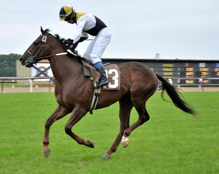 apuestas_caballos_carreras_5