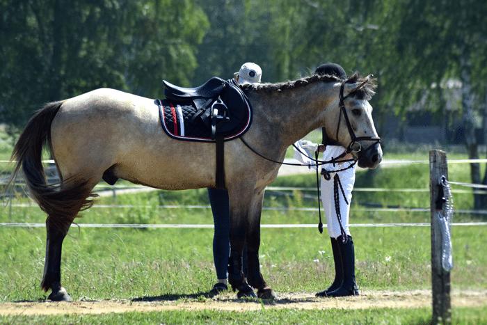 apuestas_caballos_carreras_8